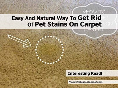 Easy And Natural Way To Get Rid Of Pet Stains On Carpet
